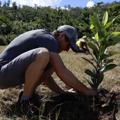 Siembran 7,500 árboles a dos años de María