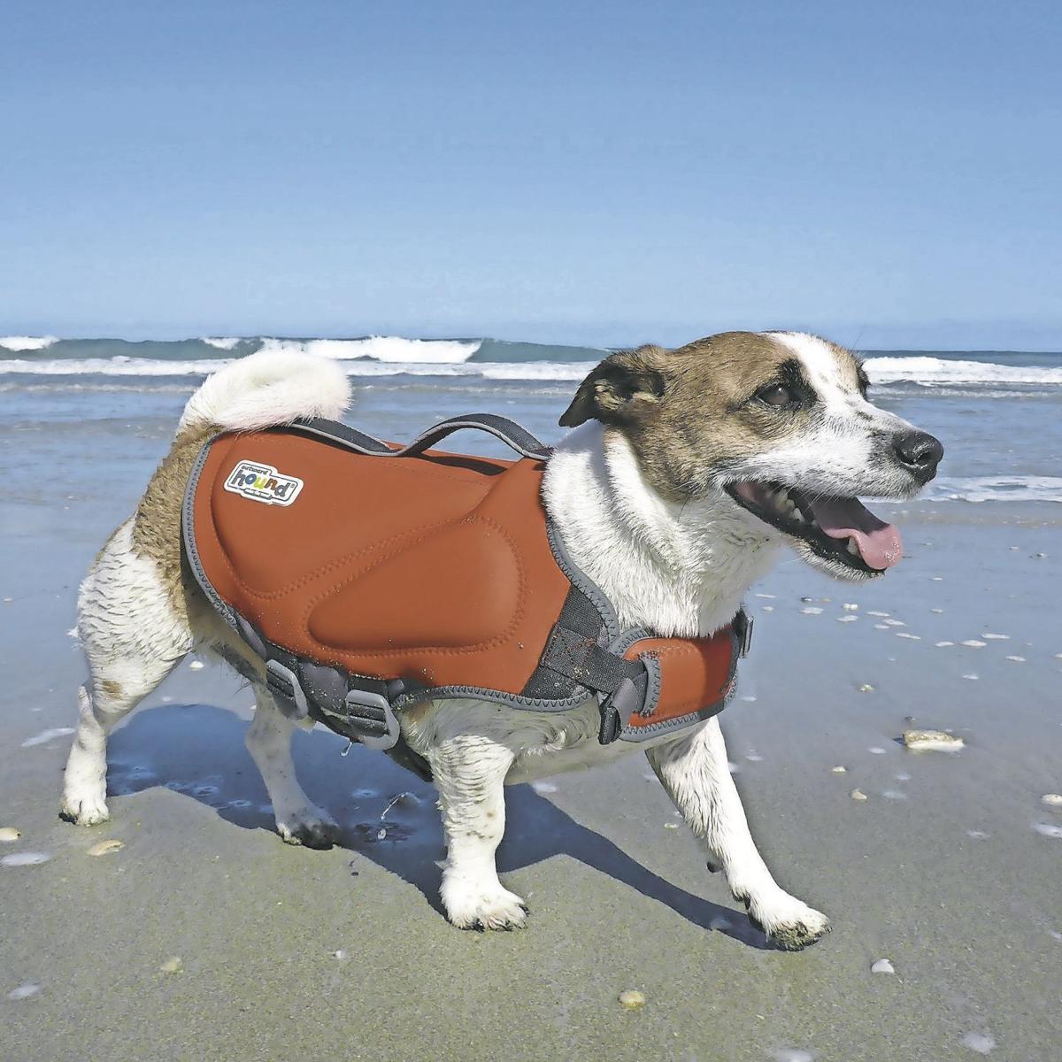 Salvavidas para perros