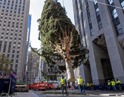 Encenderán árbol de Navidad de NY bajo normas de cuarentena