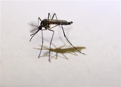 Salud prevé aumentos en los casos de Dengue