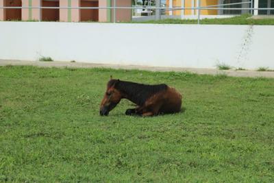 Problemática por caballos realengos