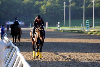 Sectores de hipismo reclaman reanudar carreras de caballos