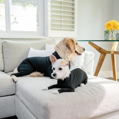 Crean traje para evitar que perros no boten pelo en el suelo