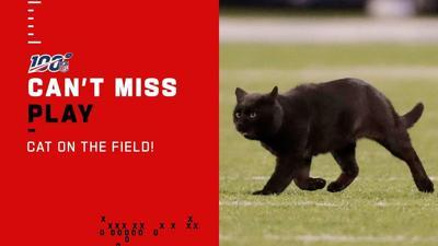 Gato negro interrumpe partido de la NFL