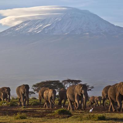 Un reporte prevé la rápida desaparición de los glaciares de África