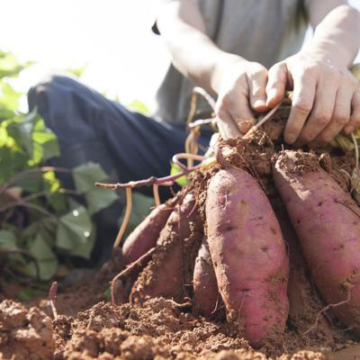 Agricultores reciben títulos de propiedad de fincas