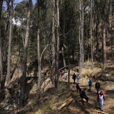 Un bosque en la capital de Bolivia ayuda a sanar el covid-19