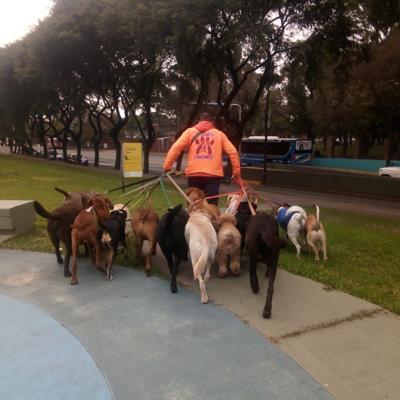 Joven lleva de paseo a mascotas en guagua escolar