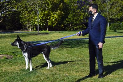 Perro de los Biden recibe ayuda profesional tras incidentes