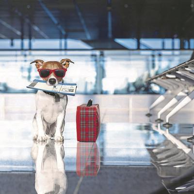 Aprende a viajar con tus mascotas