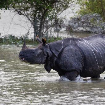 Lluvias del monzón dejan 160 muertos en el sur de Asia
