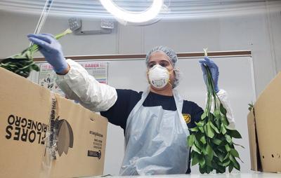 Aduanas insepcciona la entrada de flores al País