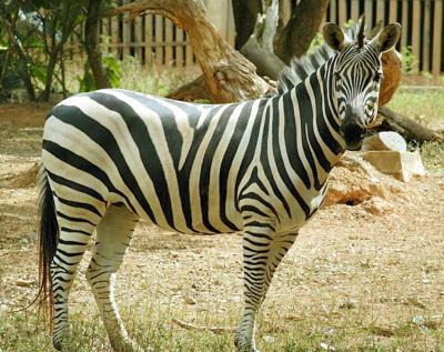 El Departamento de Justicia comienza una investigación en el zoológico de Mayagüez