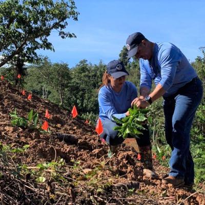 Siembran miles de árboles de café en haciendas de Adjuntas