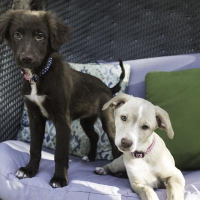 Animales rescatados podrían convertirse en la mascota oficial de Florida