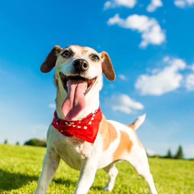 California registró altos números de adopciones de mascotas en 2019