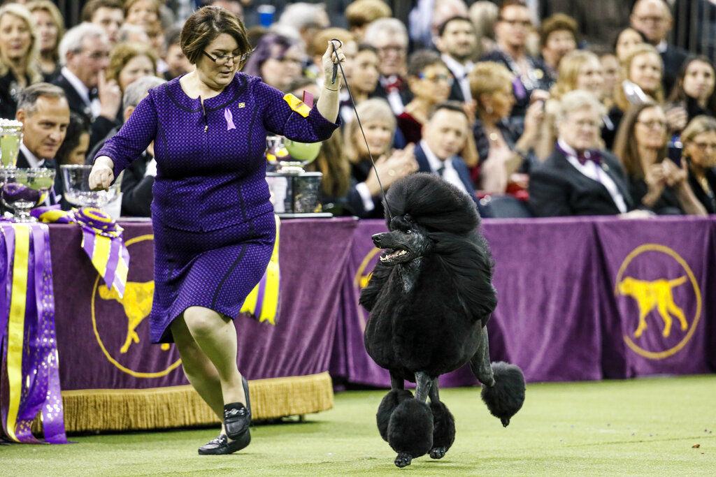 APTOPIX Westminster Dog Show
