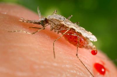 Detectan una forma de malaria que es resistente a un medicamento en África