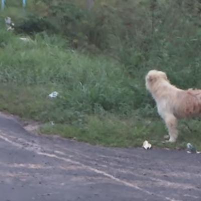 Perro se reencuentra con su dueño luego de cuatro años