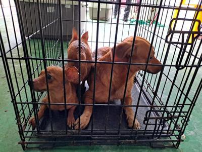 perros rescatados de una residencia en Bayamón