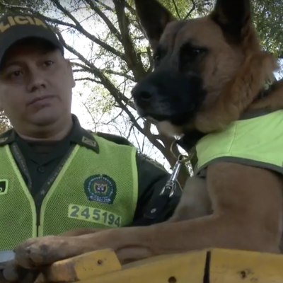 Hallan cocaína en carga de champú para caballos en Colombia