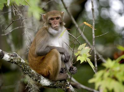 animales monos