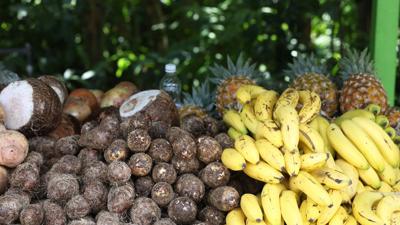 Agricultura federal aprueba incluir cultivos tradicionales para fondos por Covid-19