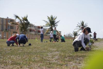 Siembran 5,000 árboles en el área sur de Puerto Rico