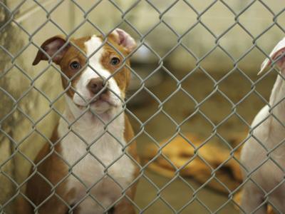 Recogerán alimentos para 10 organizaciones de bienestar animal