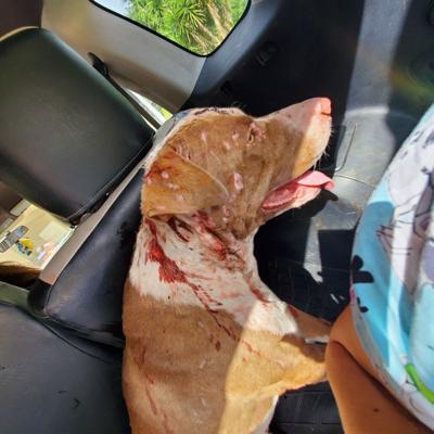 Solicitan ayuda para perro gravemente herido