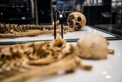 Esqueletos de la era de los vikingos se reunirán en exposición