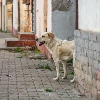 Activistas salvan animales de ser sacrificados