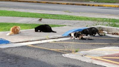 Denuncias de maltrato animal en UPR Río Piedras