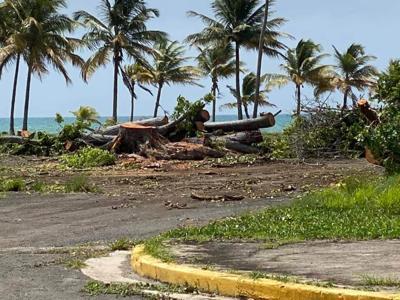 Talan árboles en balneario de Punta Santiago