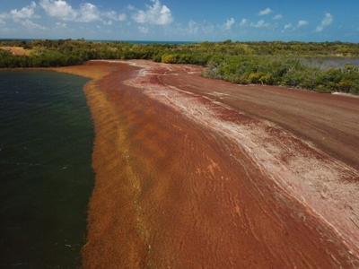 La NASA otorga subvención al RUM para investigar consecuencias del hacinamiento de sargazo en el litoral de la isla