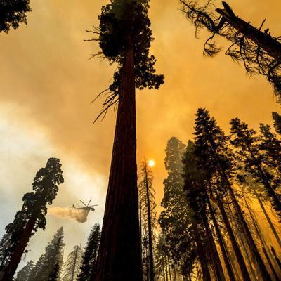 Más de 10,000 mil árboles secuoyas deberán ser retirados en California tras incendios forestales