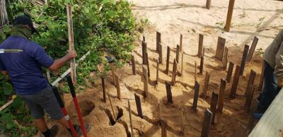 Viento en popa proyecto de restauración de dunas de arena en Loíza