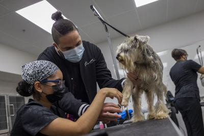 "Ofrecerán servicios gratuitos de ""grooming"" en Columbia Central University"