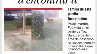 Mascotas encontradas en el mes de agosto