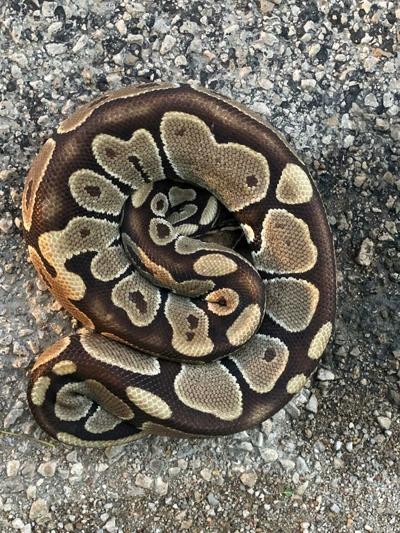 snake pic.jpg