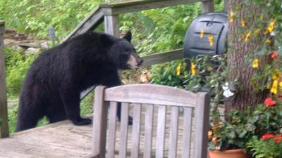 Bears and compost