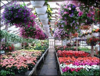 Claussens Greenhouse