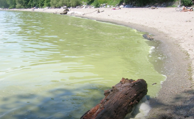 Lake Champlain cyanobacteria