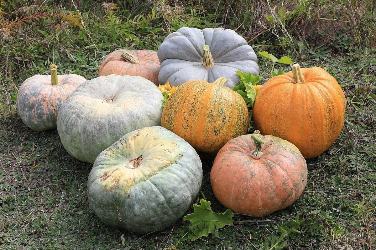 Pumpkins Stock