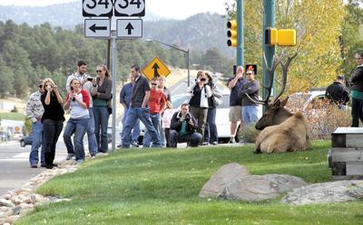 Elk Viewing