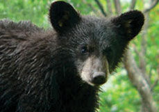 April Is Estes Cares About Bears Month