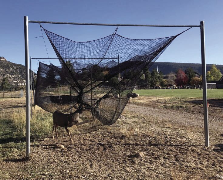 Deer tangled in net