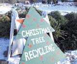 Drop Off Christmas Trees