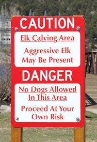 Elk Calving Season Is Here