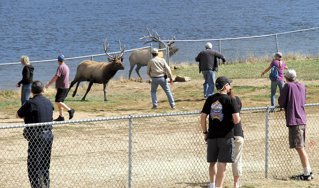 Elk Viewing